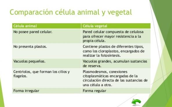 Diferencia De Celula Animal Y Vegetal Cuadro Comparativo Ayuda Por