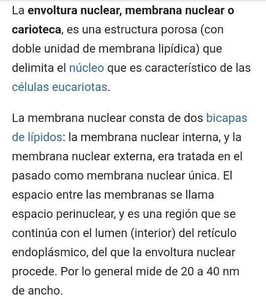 Funcion De La Envoltura Nuclear Brainly Lat