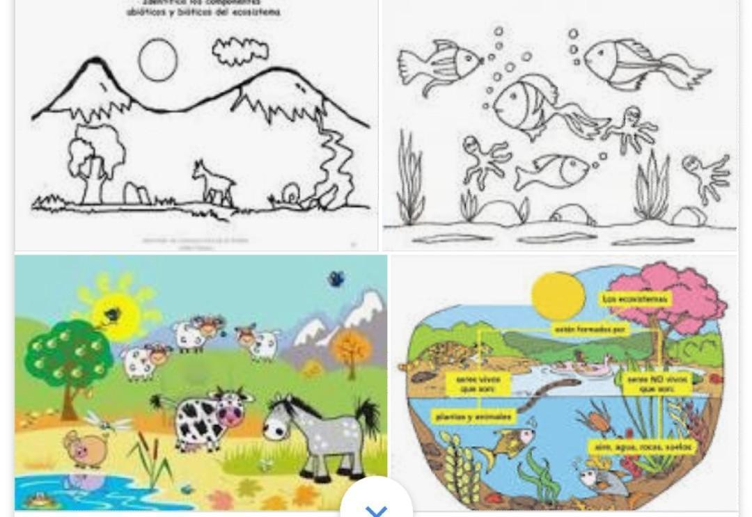 Dibujo De Ecosistema Terrestre