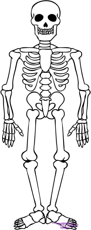 necesito un dibujo del esqueleto humano - Brainly.lat