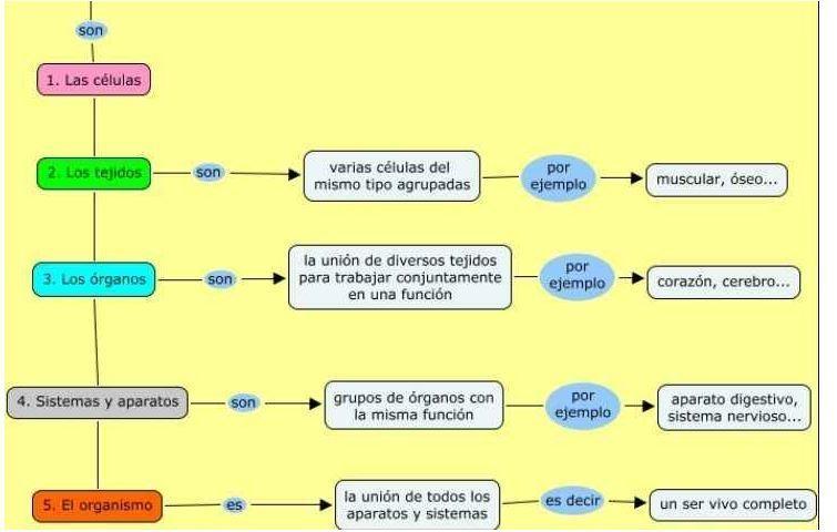 Diagrama de flujo de los niveles de organizacin biolgica descarga jpg ccuart Gallery