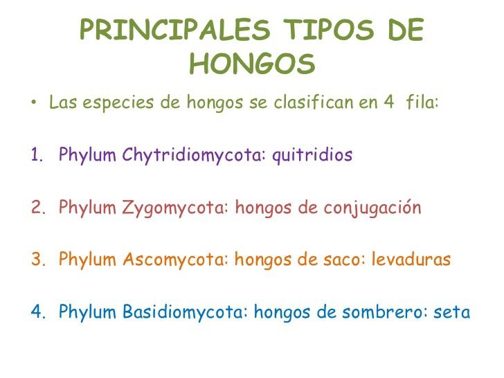 5 clases de hongos depredadores - Tipos de hongos en la pared ...