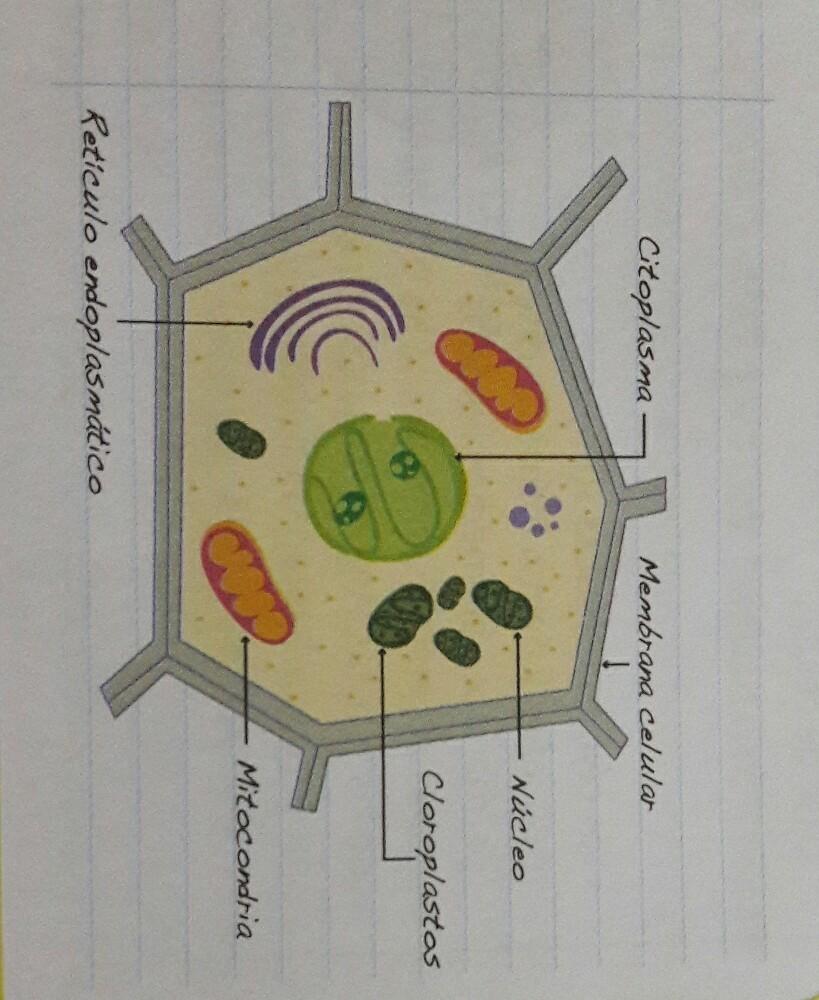 explica la tarea de Andrs para la clase de ciencias fue dibujar