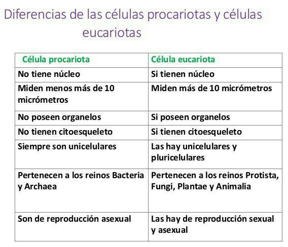 Un Cuadro Comparativo De La Célula Procariota Y Eucariota