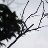 Skyblackforest