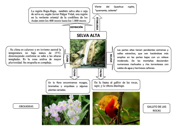 Plantas De Selva Alta: Alguien Me Puede Hacer Un Esquema Sobre La Selva Alta Por
