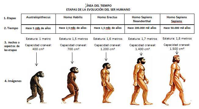 Linea de tiempo sobre el origen y evolución del hombre - Brainly.lat