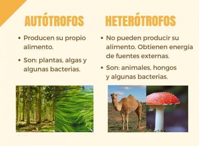 Diferencia Entre La Nutricion Autotrofa Nutricion Heterotrofa Brainly Lat