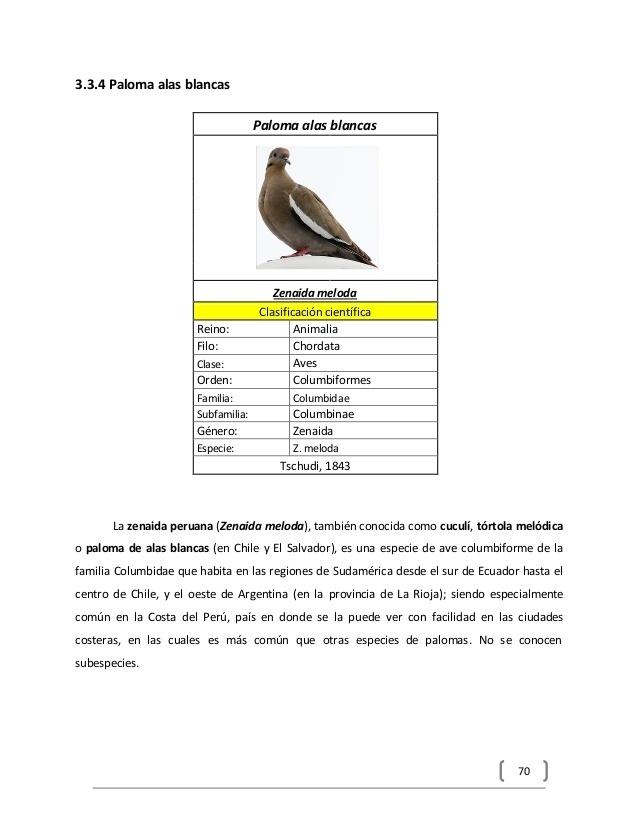clasificación de la paloma - Brainly.lat