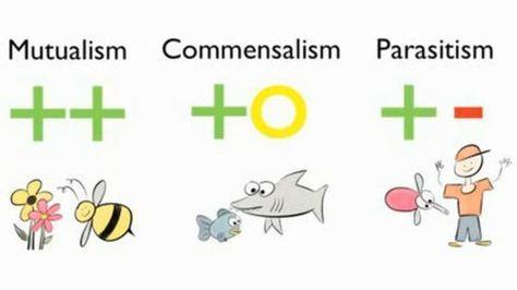 explica la diferencia entre relaciones de simbiosis mutualismo y parasitismo