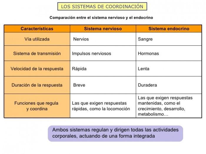 cuadro comparativo entre el sistema nervioso y el sistema ...