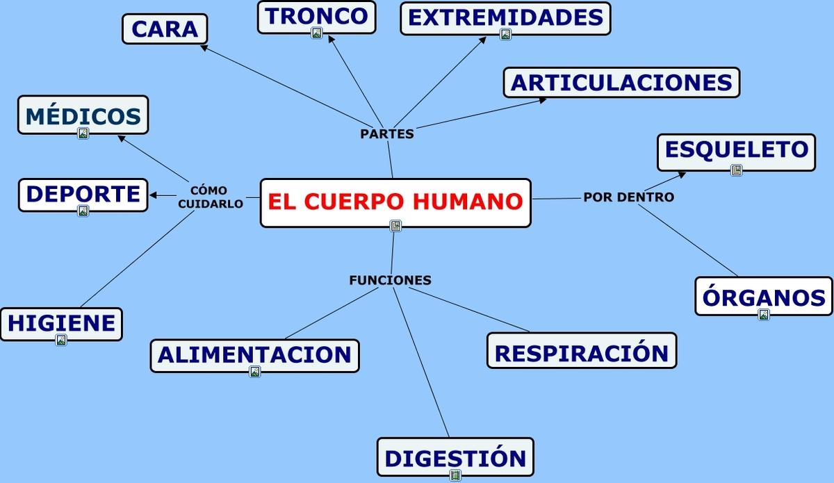 mapa conceptual de la cabeza del cuerpo humano - Brainly.lat