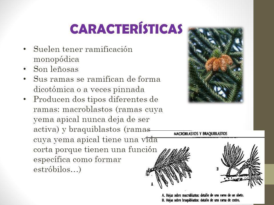 Caracteristicas de las plantas gimnospermas ayuda porfa for Arboles con sus nombres y caracteristicas