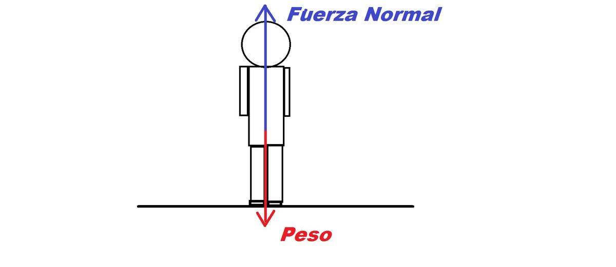Construye el diagrama de fuerzas que actúan sobre tu cuerpo cuando ...