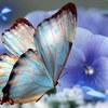 azulblue99