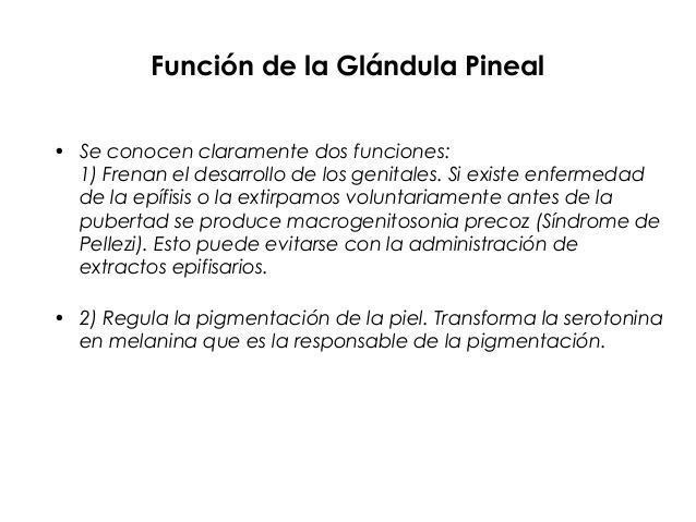Alguien podria decirme las funciones de la glandula pineal y sus ...