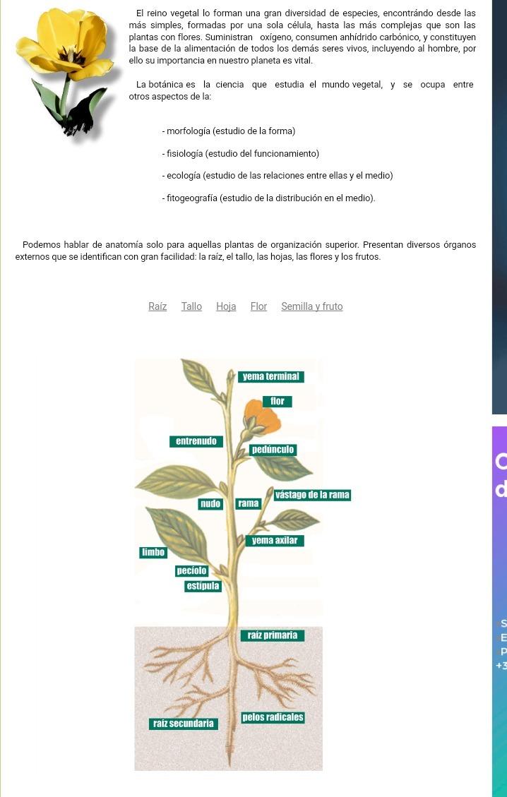 Nombre de la planta que tiene estructura compleja - Brainly.lat