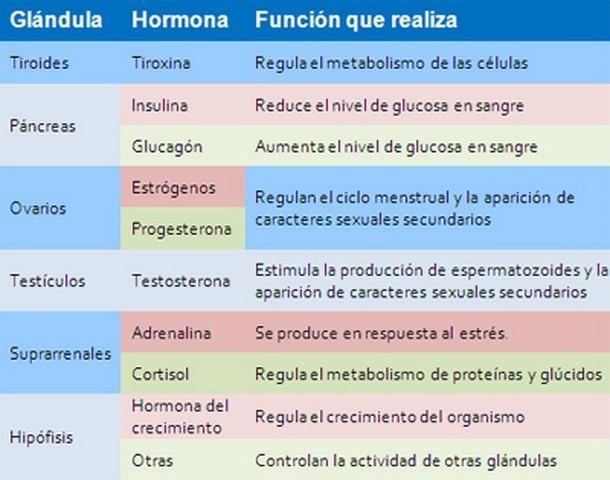 elaborar un mapa conceptual sobre hormonas producidas en el cuerpo ...