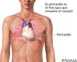 en parte del cuerpo esta el corazon