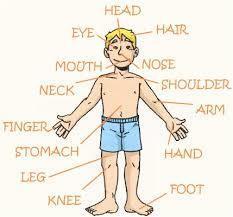 el cuerpo humano y sus partes en ingles si alguien me puede ayudar