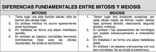 Cuadro Comparativo De Los Procesos De Division Celular Mitosis Y Meiosis
