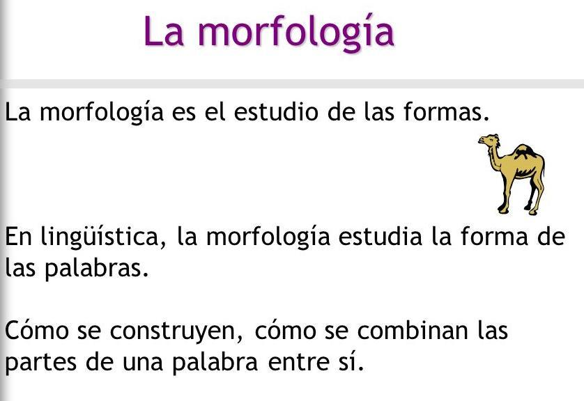 Analiza Morfológicamente La Palabra Hondaondabello Vello
