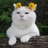 Mabelcat