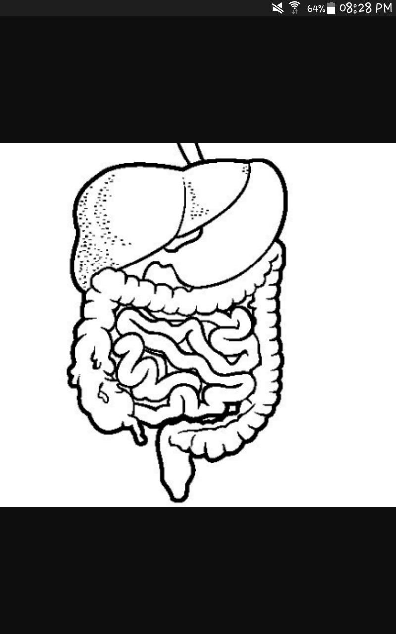 Dibujo Para Colorear Del Sistema Digestivo Pero Rápido