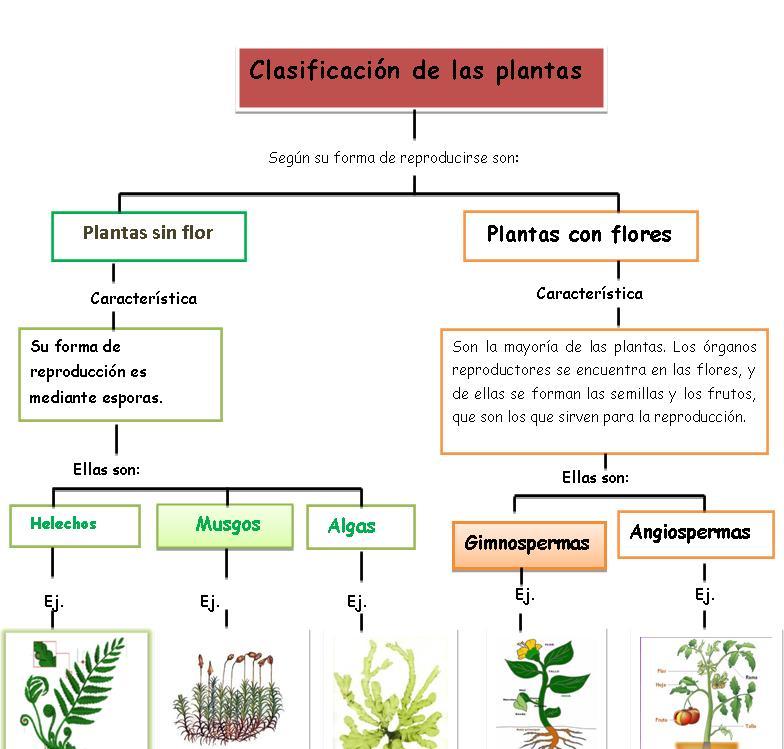 Clasificacion de las plantas con imagen para ni os de for Clasificacion de las plantas ornamentales