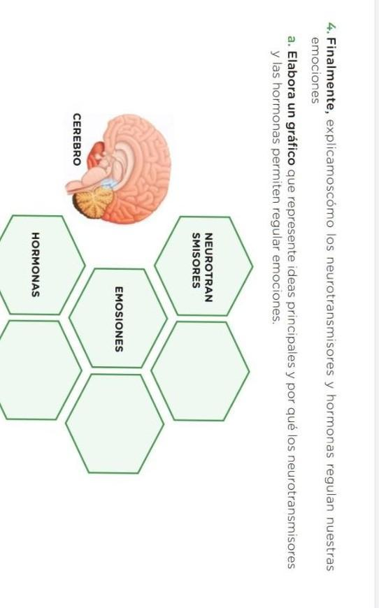 Finalmente Explicamos Los Neurotransmisores Y Hormonas Regulan Nuestras Emociones Elabora Un Grafico Brainly Lat