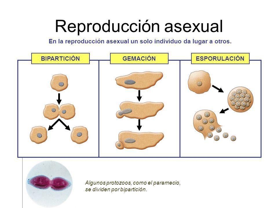 Que significa asexual en biologia