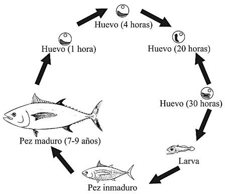 Explicar la reproducci n de los for La reproduccion de los peces