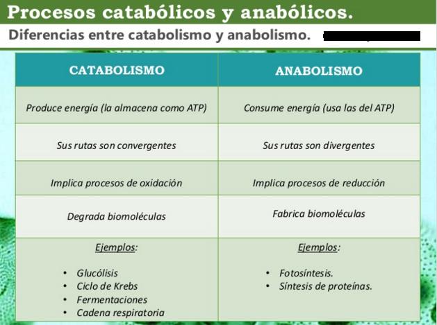 La información encima de metabolismo tisular