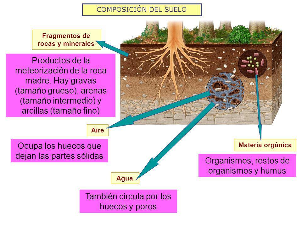 Cual es la composici n del suelo for Componentes quimicos del suelo