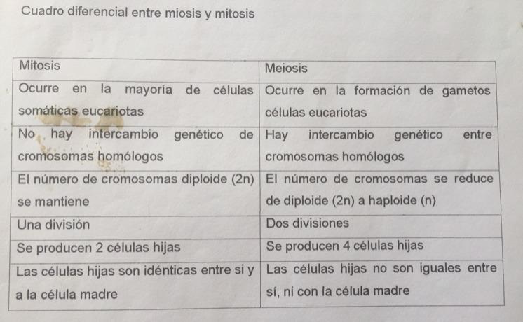 Cuadro Comparativo Entre Mitosis Y Meiosis Muchas Gracias