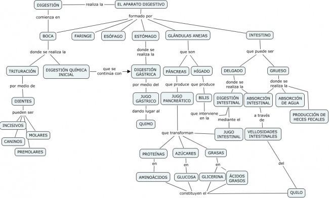 Mapa Conceptual Aparato Digestivo.Mapa Conceptual Del Sistema Digestivo Alguien Sabe Brainly Lat
