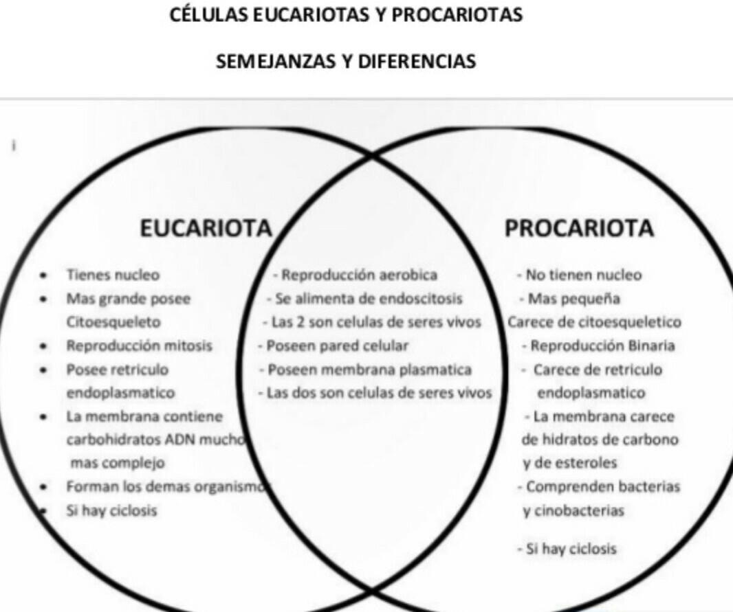 Qué Diferencias Y Similitudes Hay Entre Las Células Procariotas Y Eucariotas Brainly Lat