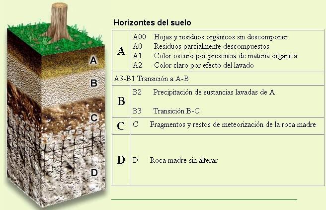 Dibujo de los horizontes del suelo for Que elementos conforman el suelo