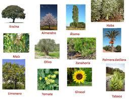 Plantas Industriales Y Su Utilidad