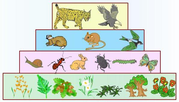 Explique La Estructura Trofica De Los Ecosistema Porfa Brainly Lat
