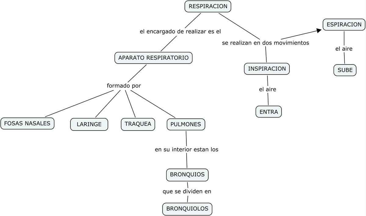 Cuadro sinoptico de tipos de respiracion for Tipos de cuadros