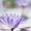 florbusquet