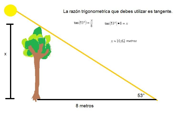Determina la altura de un rbol sabiendo que su sombra for Cuanto mide un arbol