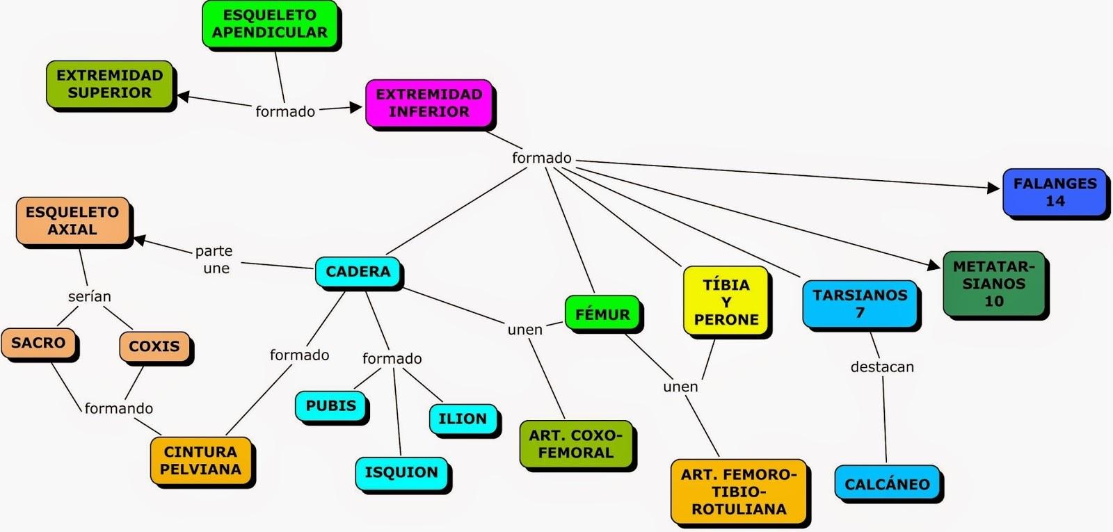 mapa conceptual de el sistema esquelético humano - Brainly.lat