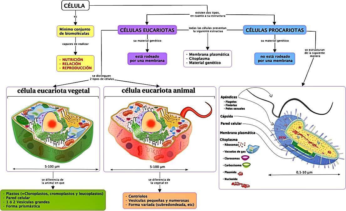Estructura Celular Donde Se Almacena La Información
