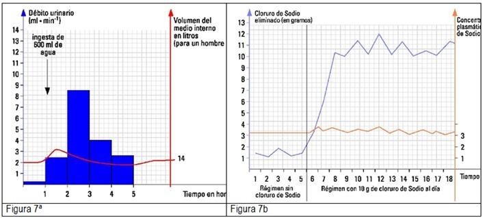 cantidad normal de orina producida por el ser humano diariamente