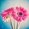 flowerlili