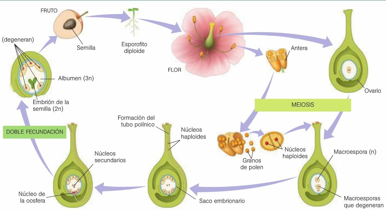 Fotos de plantas que se reproducen sexualmente